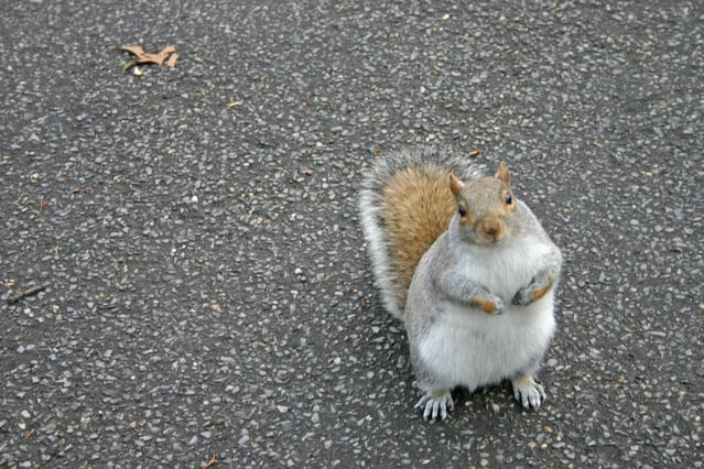 squirrel on the road
